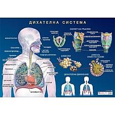 Дихателна система A3