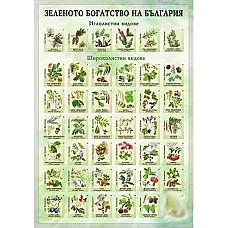 Зеленото богатство на България - мини табло А4